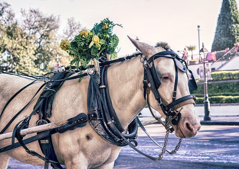 Koń wzaprzęgu Koń wzaprzęgu Źródło: licencja: CC 0.