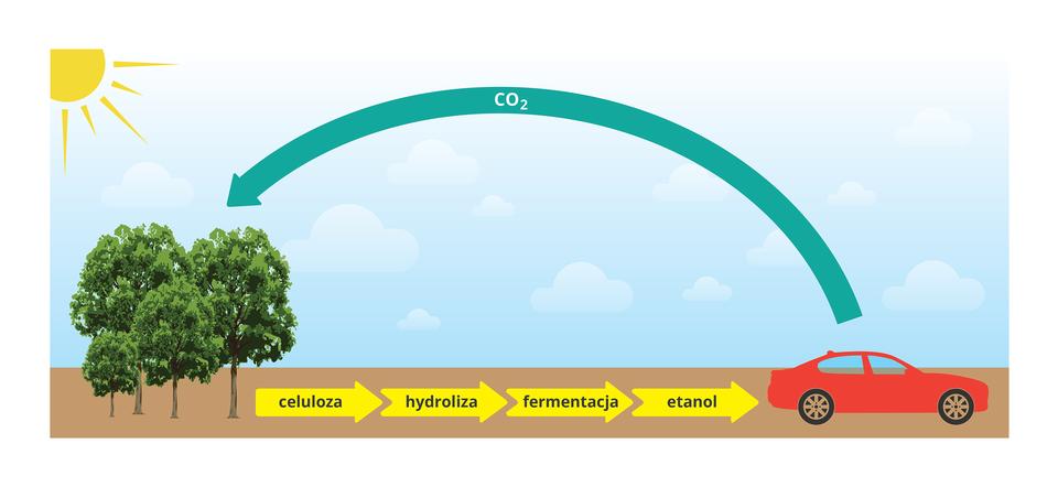 Ilustracja przestawia na błękitnym tle po lewej grupę zielonych drzew, anad nimi żółte słońce. Zprawej znajduje się czerwony samochód. Gruba niebieska strzałka znapisem CO dwa prowadzi od niego do drzew. Na dole wbrązowym pasku znajdują się cztery grube, żółte strzałki znapisami: celuloza, hydroliza, fermentacja, etanol prowadzące do auta.