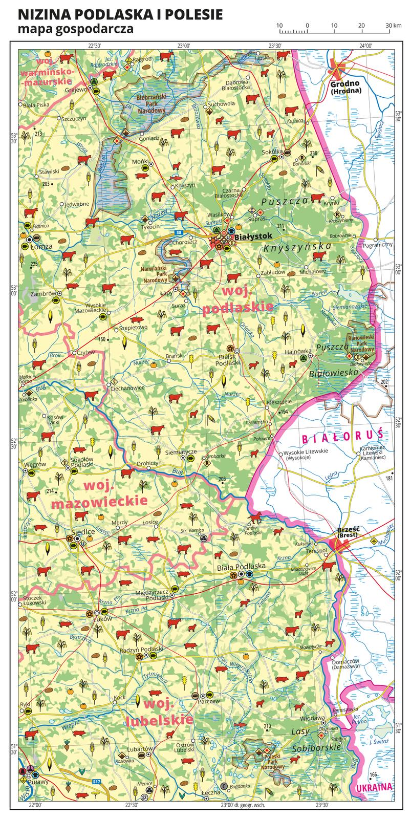 Ilustracja przedstawia mapę gospodarczą Niziny Podlaskiej iPolesia. Tło mapy wkolorze żółtym (grunty orne), jasnozielonym (łąki ipastwiska) izielonym (lasy). Mapa obejmuje tereny od Łomży iPuław na zachodzie po wschodnią granicę Polski zBiałorusią iUkrainą. Na mapie sygnatury obrazujące uprawy poszczególnych roślin, hodowlę zwierząt, przemysł, górnictwo ienergetykę, komunikację, turystykę, naukę, kulturę isztukę. Największe zagęszczenie sygnatur wBiałymstoku. Duże zagęszczenie sygnatur wSiedlcach, Puławach, Łomży iBiałej Podlaskiej. Na obszarze całej mapy równomiernie rozłożone sygnatury związane zhodowlą zwierząt iuprawą roślin. Na mapie przedstawiono sieć dróg ikolei, porty wodne ilotnicze, granice województw, granicę państwa. Opisano województwa mazowieckie, lubelskie, podlaskie iwarmińsko-mazurskie. Opisano Białoruś iUkrainę. Opisano kompleksy leśne, na przykład Puszczę Białowieską iparki narodowe. Mapa zawiera południki irównoleżniki, dookoła mapy wbiałej ramce opisano współrzędne geograficzne co trzydzieści minut.
