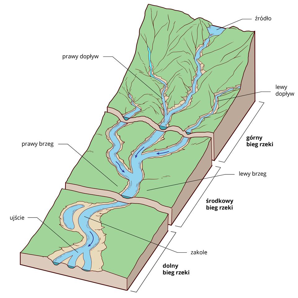 Ilustracja prezentuje profil rzeczny. Na profilu rzecznym wyróżnia się: górny, środkowy oraz dolny bieg rzeki. Od góry widoczne źródło rzeki, dalej do koryta rzecznego uchodzą dopływy prawy ilewy. Wśrodkowym biegu koryto rzeczne jest szersze niż wgórnym. Wdolnym biegu rzeki tworzą się zakola oraz starorzecza, rzeka kończy się ujściem do morza.