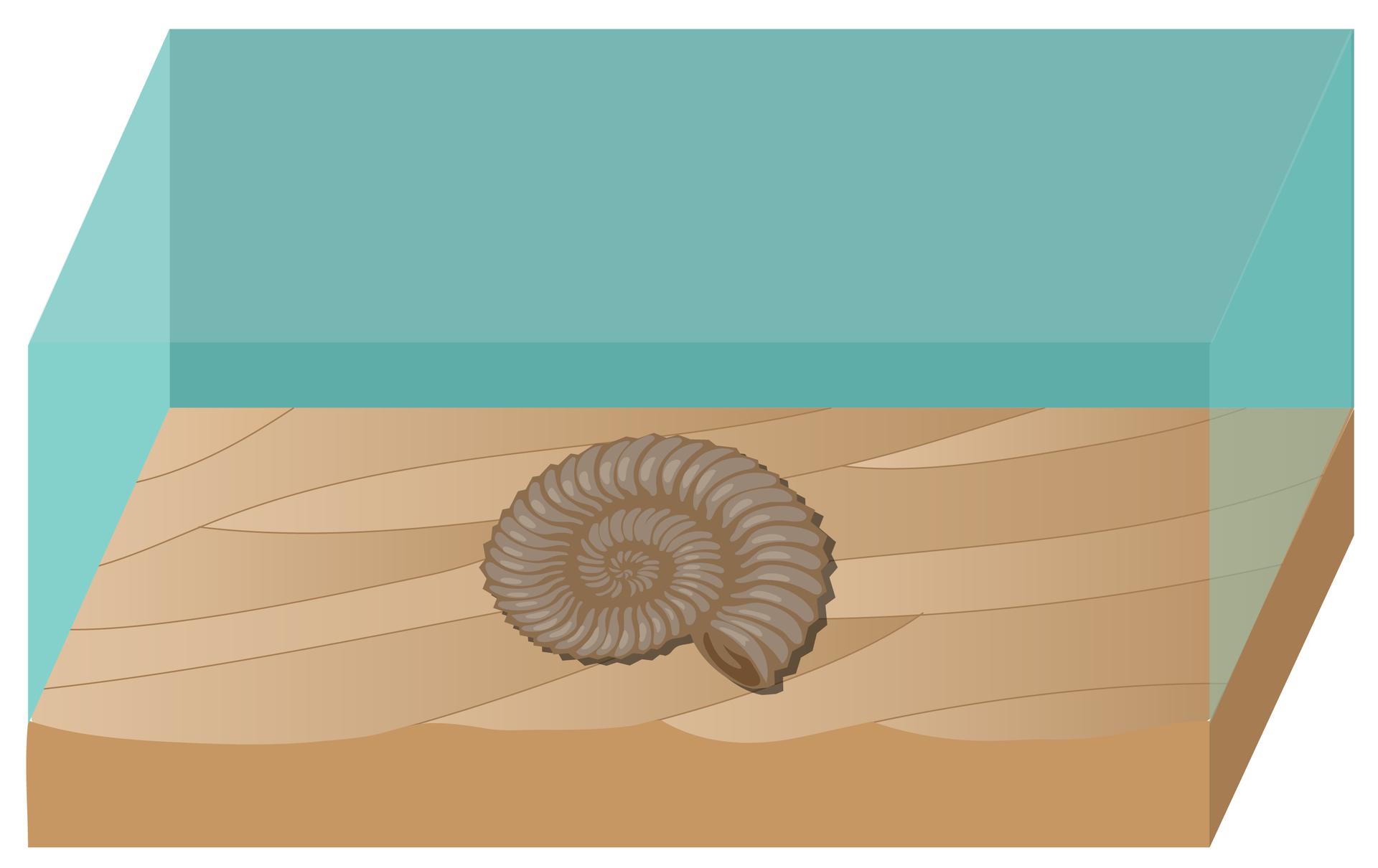 Rysunek przedstawia pustą muszlę amonita, leżącą na dnie. Miękkie części zwierzęcia zostały zjedzone.