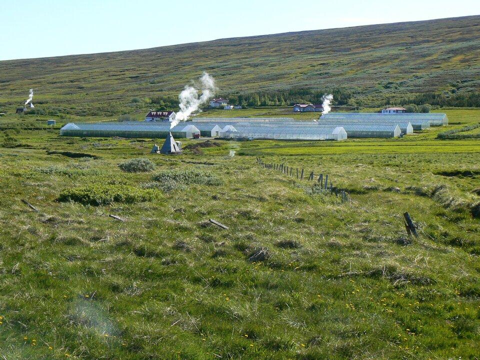Na zdjęciu rozległy teren zielony, łąka. Wcentralnej części zdjęcia około dziesięciu długich szklarni. Zabudowania gospodarcze. Unosi się dym.