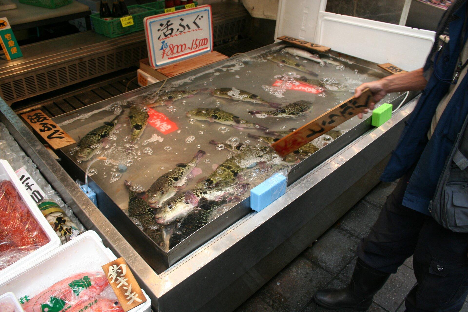 Na zdjęciu świeże ryby na sprzedaż.