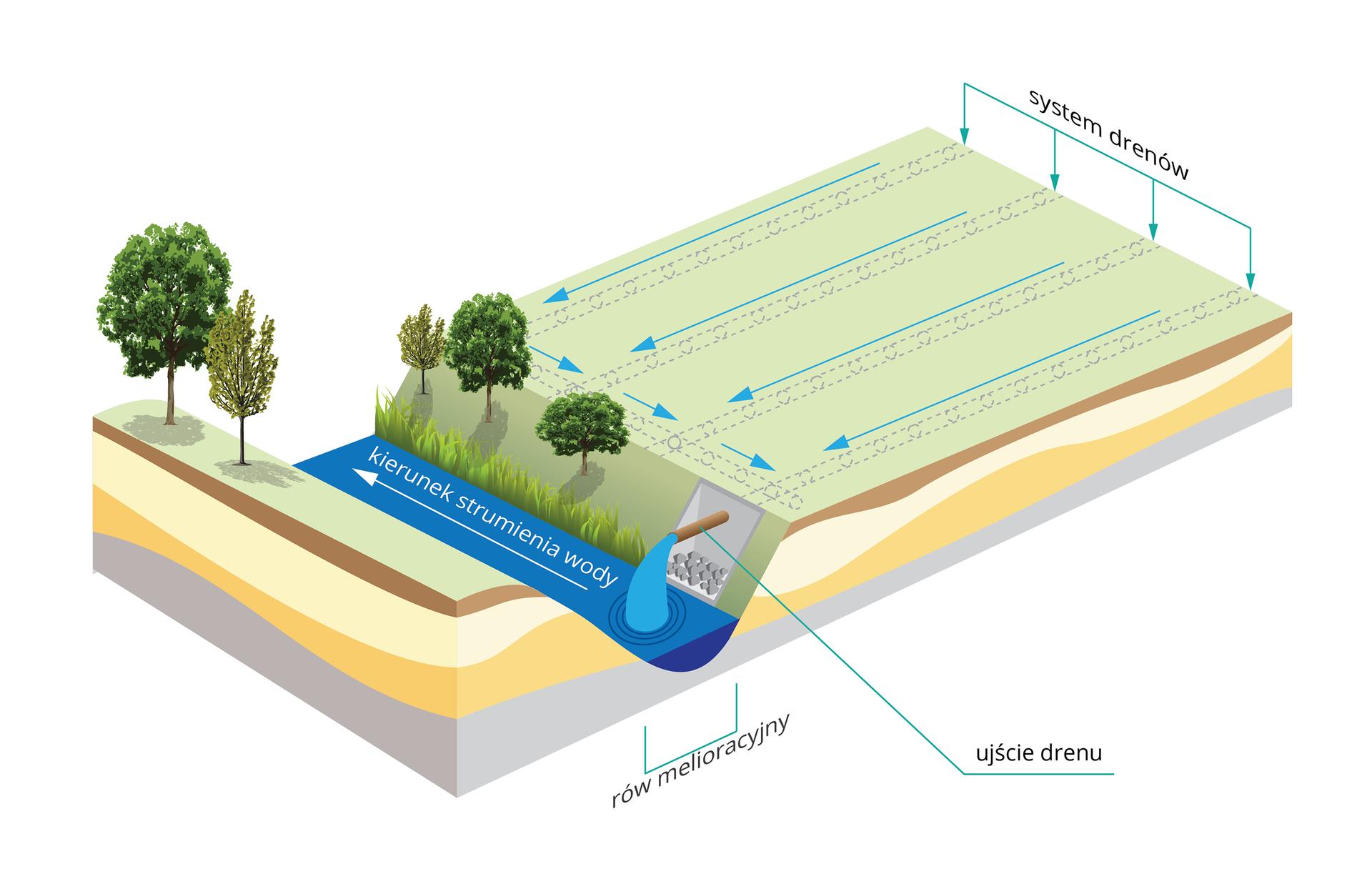 Ilustracja przedstawia przekrój przestrzenny przez teren rolniczy. Zprawej na szarej płaszczyźnie pola niebieskimi strzałkami oznaczono spływ wody wsystemie drenów wziemi. Woda spływa nimi do ujścia, czyli brązowej rury, która odprowadza ją do rowu melioracyjnego. Wnim na niebieskim tle biała strzałka wskazuje kierunek strumienia wody. Przy rowie ukazano kilka drzewek jasno iciemno zielonych.