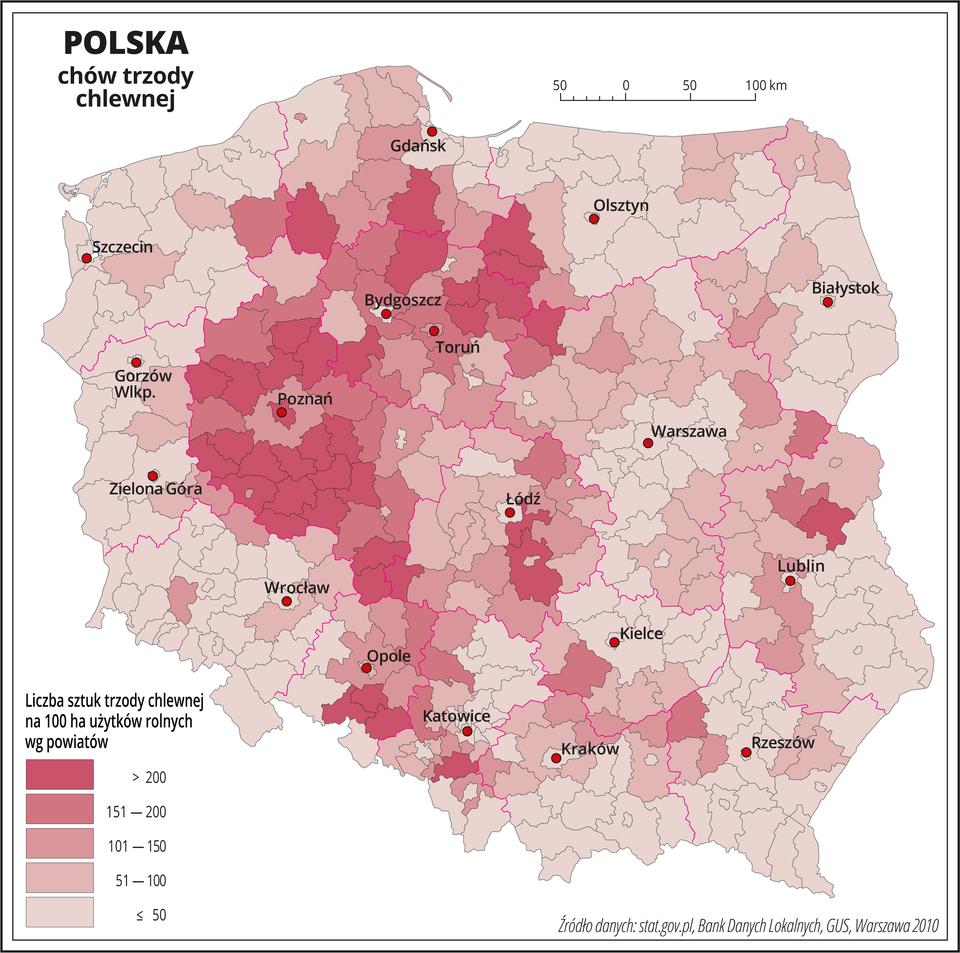 Ilustracja przedstawia mapę Polski zpodziałem na powiaty, na której za pomocą kolorów przedstawiono liczbę sztuk trzody chlewnej na sto hektarów użytków rolnych wg powiatów. Na mapie czerwonymi liniami oznaczono granice województw, aczarnymi granice powiatów, czerwonymi kropkami oznaczono miasta wojewódzkie ije opisano. Najciemniejszym odcieniem koloru różowego oznaczono obszary, gdzie występuje powyżej dwustu sztuk trzody chlewnej na sto hektarów użytków rolnych. Jest to województwo wielkopolskie ikujawsko-pomorskie. Bezpośrednio do tych obszarów przylegają powiaty oznaczone nieco jaśniejszymi odcieniami koloru różowego obrazującymi występowanie od stu do dwustu sztuk trzody chlewnej na sto hektarów użytków rolnych. Pozostałą – przeważającą część Polski oznaczono najjaśniejszymi odcieniami koloru różowego obrazującymi występowanie poniżej stu sztuk trzody chlewnej na sto hektarów użytków rolnych. Poniżej mapy wlegendzie opisano kolory użyte na mapie.