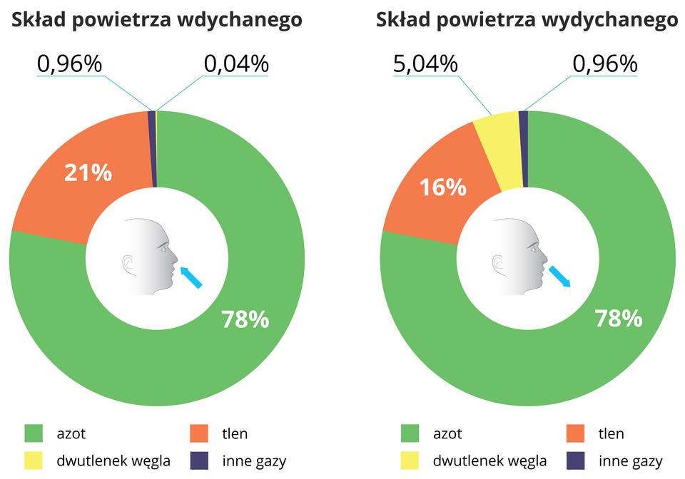 Po lewej stronie widnieje schemat kołowy składu powietrza wdychanego. Na zielono oznaczono 78% azotu, na brązowo 21% tlenu, na żółto 0,96 % dwutlenku węgla, kolorem granatowym 0,04% innych gazów. Po prawej stronie znajduje się schemat kołowy składu powietrza wydychanego: azot 78%, Tlen 16%, Dwutlenek węgla 5,04%, inne gazy 0,96%.