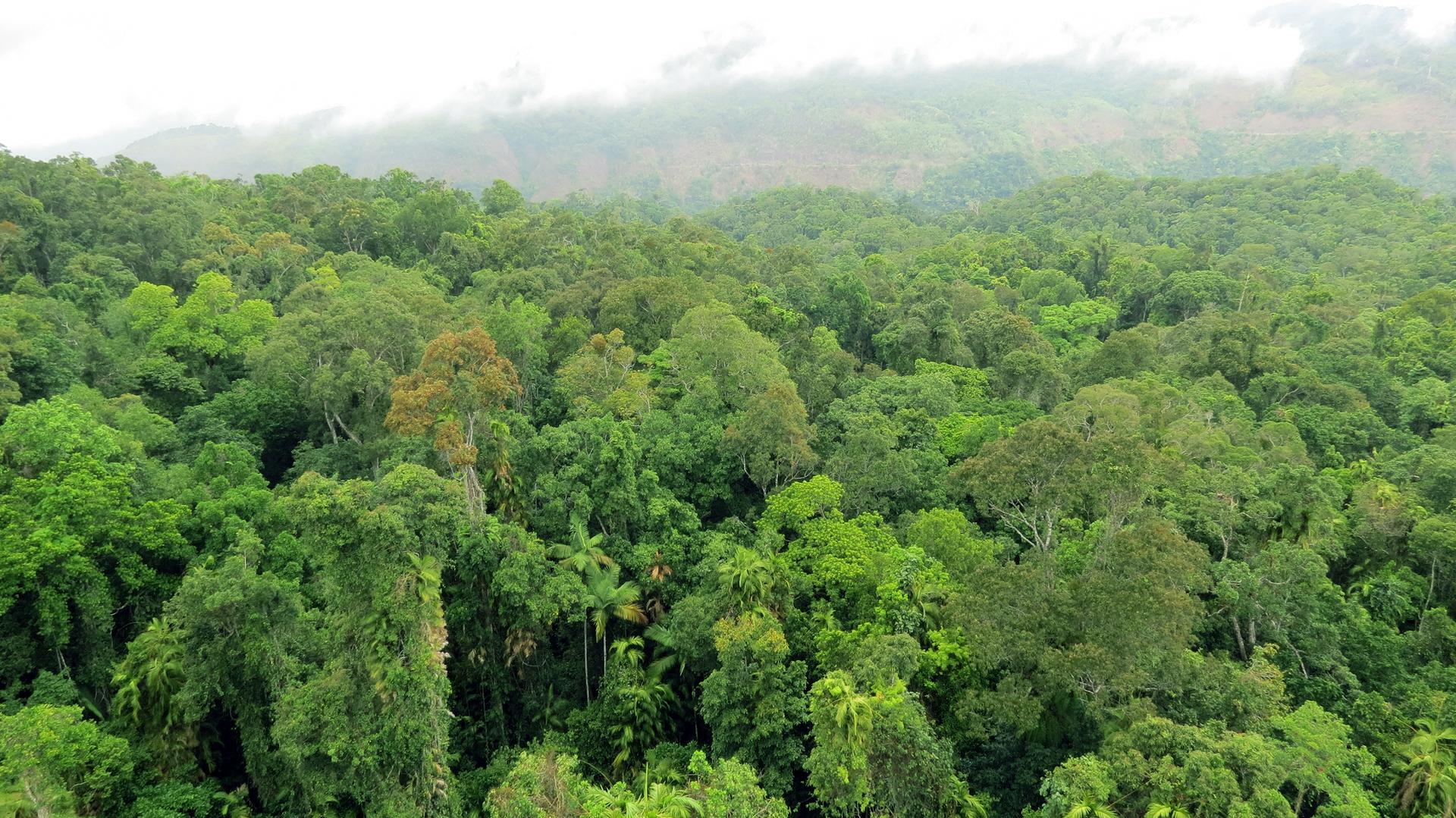 Galeria prezentuje fotografie wykonane na poszczególnych piętrach lasu równikowego. Fotografia pierwsza prezentuje najwyższego piętro lasu równikowego, które stanowią pojedyncze najwyższe korony drzew wystające ponad resztę lasu.