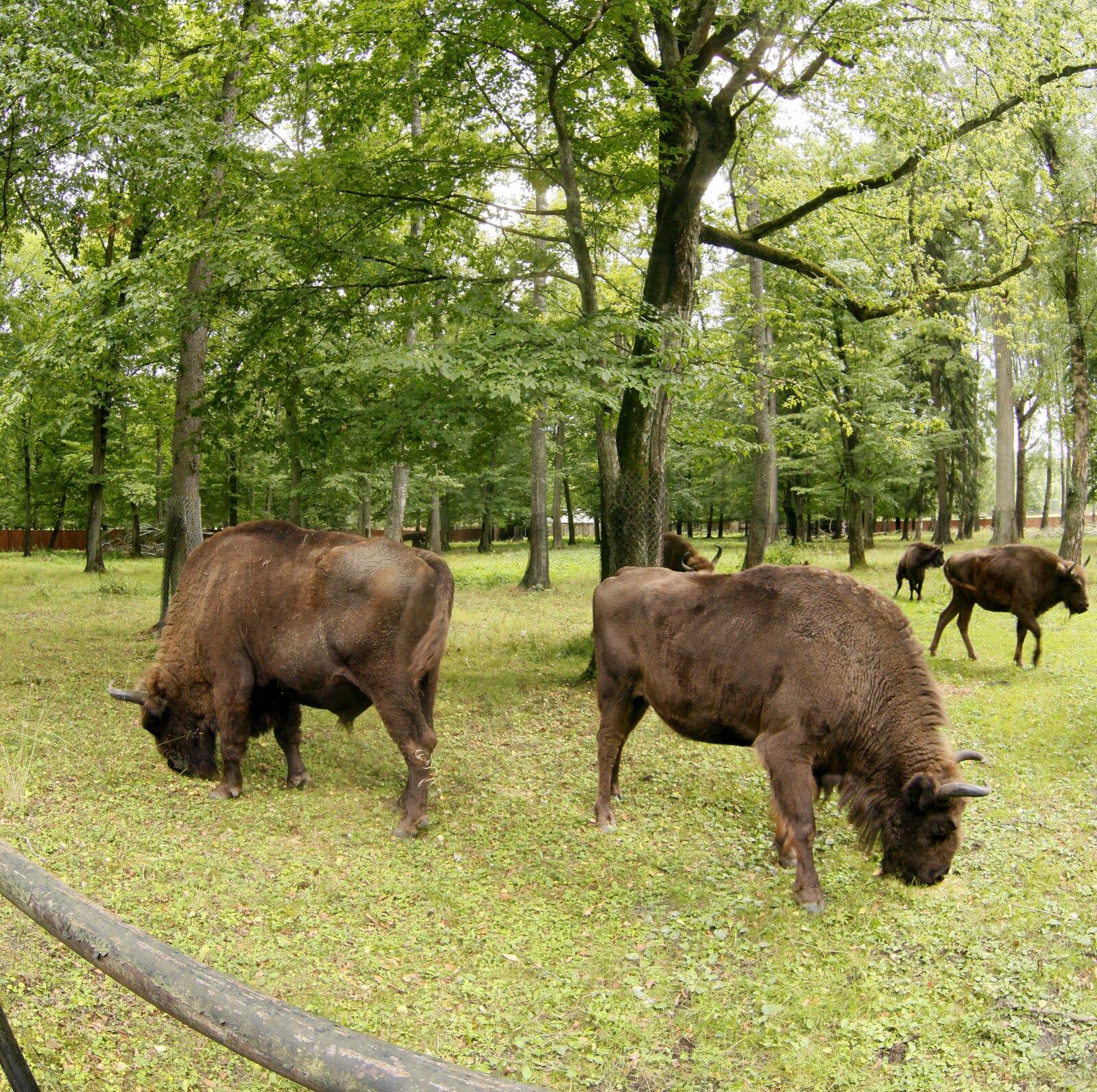 panorama wirtualna Białowieski Park Narodowy