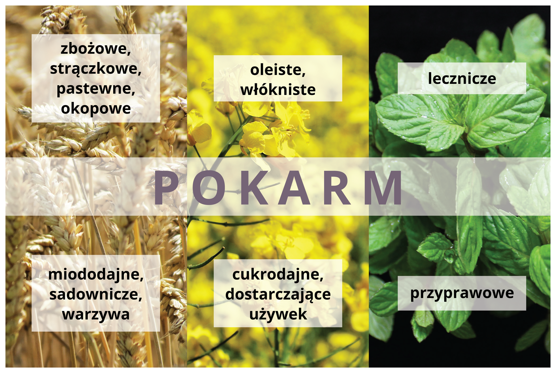Plansza przedstawia sześć fotografii, na które nałożono jaśniejszy pas znapisem pokarm. Na każdej zfotografii umieszczono jaśniejszy prostokąt zopisem wykorzystania roślin.
