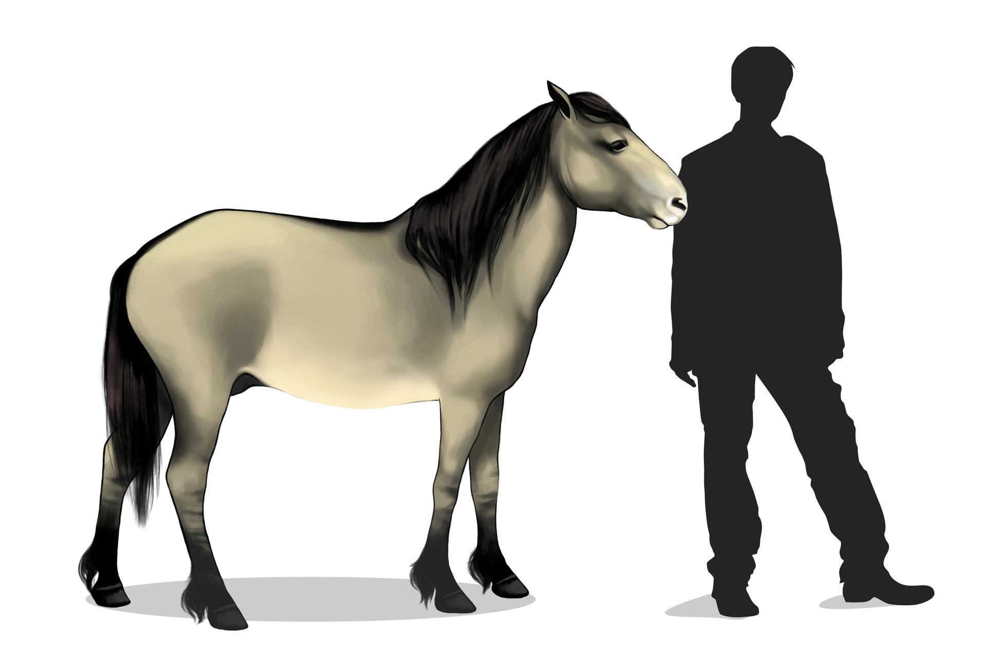 Ilustracja przedstawia sylwetkę beżowego, niskiego konia obok grafitowej sylwetki stojącego człowieka. Tarpan ma czarną grzywę, nogi iogon.