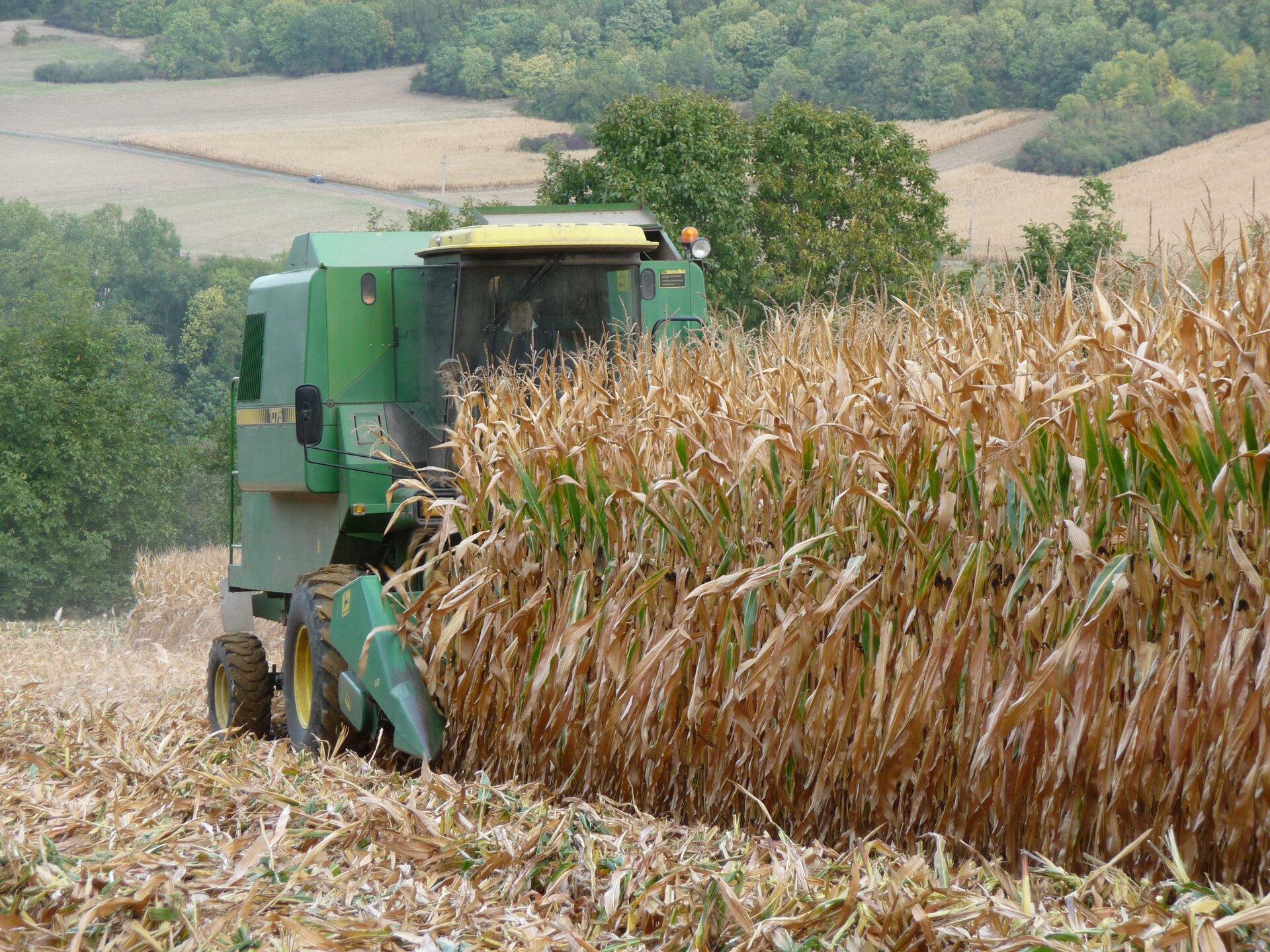 Na zdjęciu mechaniczny zbiór kukurydzy. Po polu jedzie kombajn. Wtle drzewa.