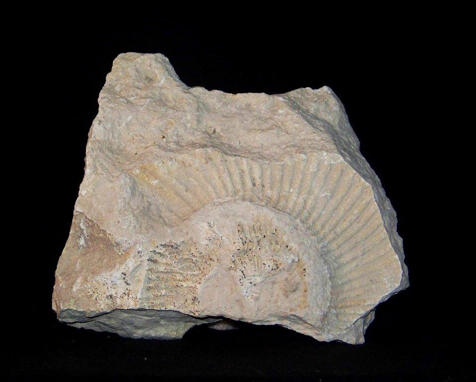 Galeria prezentuje siedem rodzajów skał osadowych. Pierwsza fotografia, to biały wapień zodciskiem muszli amonita.