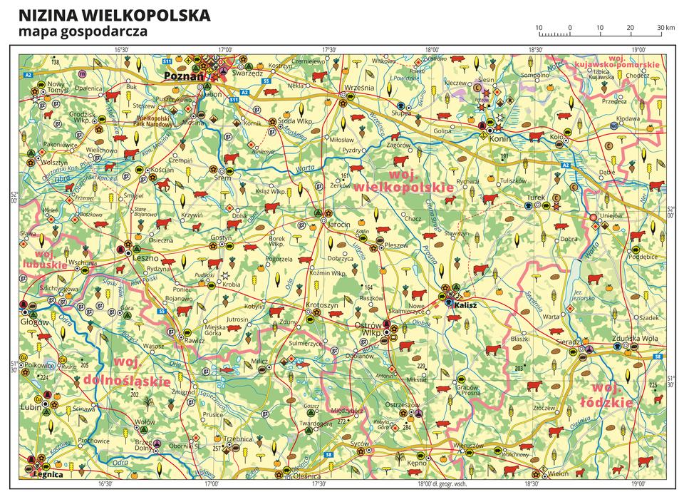 Ilustracja przedstawia mapę gospodarczą Niziny Wielkopolskiej. Tło mapy wkolorze żółtym (grunty orne), jasnozielonym (łąki ipastwiska) izielonym (lasy). Na mapie sygnatury obrazujące uprawy poszczególnych roślin, hodowlę zwierząt, przemysł, górnictwo ienergetykę, komunikację, turystykę, naukę, kulturę isztukę. Mapa obejmuje tereny Polski od granicy zNiemcami na zachodzie po Toruń iWłocławek na wschodzie, na północy sięgając Bydgoszczy, ana południu Leszna. Największe zagęszczenie sygnatur wPoznaniu, Kaliszu iLegnicy. Duże zagęszczenie sygnatur wKoninie, Ostrowie Wielkopolskim, Sieradzu, Lesznie iLubinie. Na mapie przedstawiono sieć dróg ikolei, porty wodne ilotnicze, granice województw, granicę państwa. Opisano województwa wielkopolskie, kujawsko-pomorskie, łódzkie, dolnośląskie ilubuskie. Opisano Niemcy. Mapa zawiera południki irównoleżniki, dookoła mapy wbiałej ramce opisano współrzędne geograficzne co trzydzieści minut.