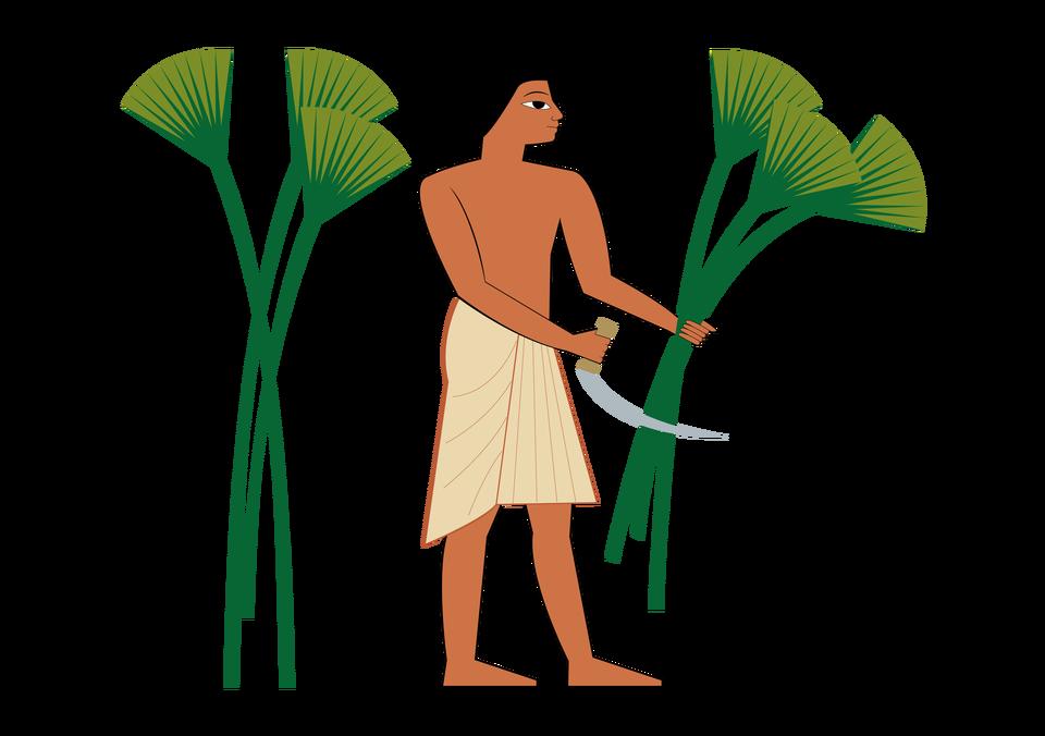 Najpierw Egipcjanie ścinali ioczyszczali rośliny Najpierw Egipcjanie ścinali ioczyszczali rośliny Źródło: Contentplus.pl sp. zo.o., licencja: CC BY 3.0.