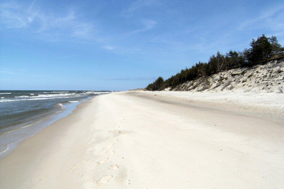 Na zdjęciu piaszczysta plaża, brzeg morza. Wydmy porośnięte kępami traw iniskimi drzewami.