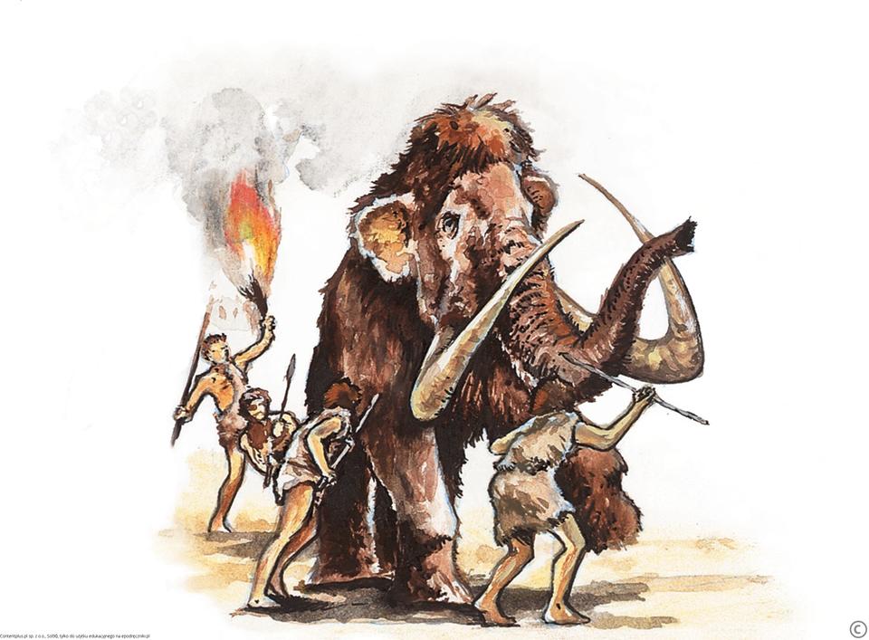 Ubrani wskóry ludzie zoszczepami wrękach otaczają owłosionego mamuta