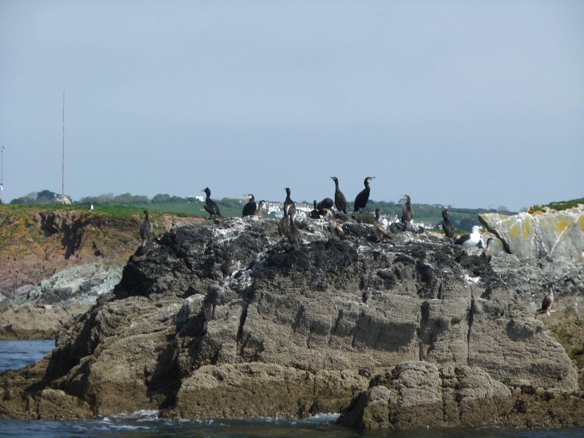 Fotografia przedstawia szare skały, oblewane wodą. Siedzą na nich czarne ptaki zbiałymi policzkami, czyli kormorany. Na skałach białe zacieki ptasich odchodów.