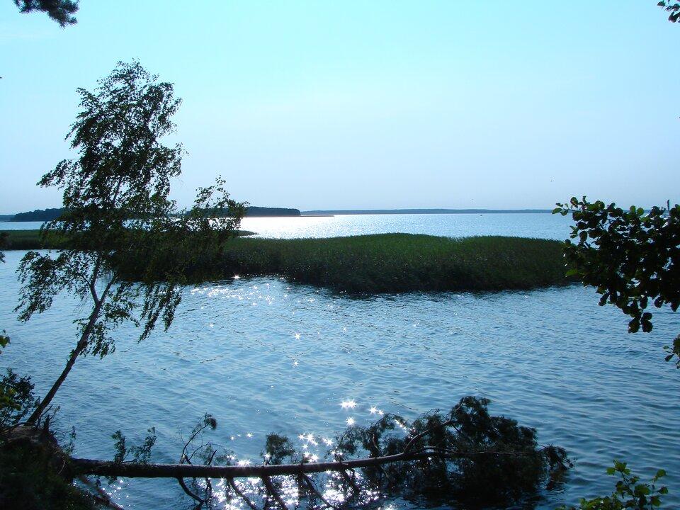 Na zdjęciu duże jezioro, wwodzie trzciny, na odległym brzegu lasy.