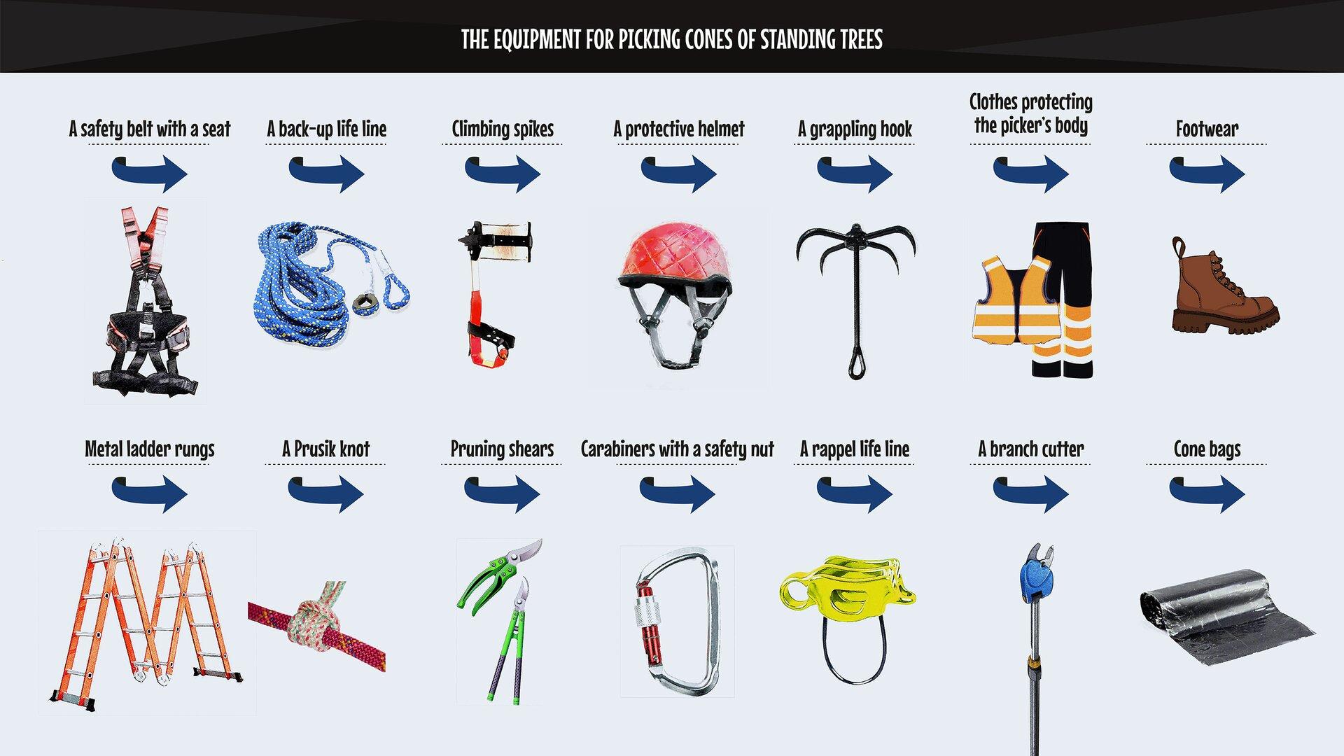 Apicker's equipment: 1: climbing spikes, 2. metal ladder rungs, 3: asafety belt with aseat, 4: carabiners with asafety nut, 5: aworking life line , 6: aback-up life line, 7: aPrusik knot, 8: arappel life line, 9: agrappling hook, 10: pruning shears, 11: abranch cutter, 12: clothes protecting the picker's body, 13: footwear, 14: aprotective helmet, 15: bags, 16: baskets, 17: cone bags. Wyposażenie zbieracza: 1- włazy kolcowe, 2- segmenty drabiny metalowej, 3- pas bezpieczeństwa zsiodełkiem, 4- karabinki znakrętką zabezpieczającą, 5- linka asekuracyjna robocza, 6- linka asekuracyjna pomocnicza, 7- pętla prusika, 8- linka asekuracyjno-zjazdowa, 9- kotwiczka, 10- sekator, 11- przyginacz gałęzi, 12- odzież chroniąca ciało zbieracza, 13- obuwie, 14- hełm ochronny, 15- torby, 16- kosze, 17- worki do szyszek.