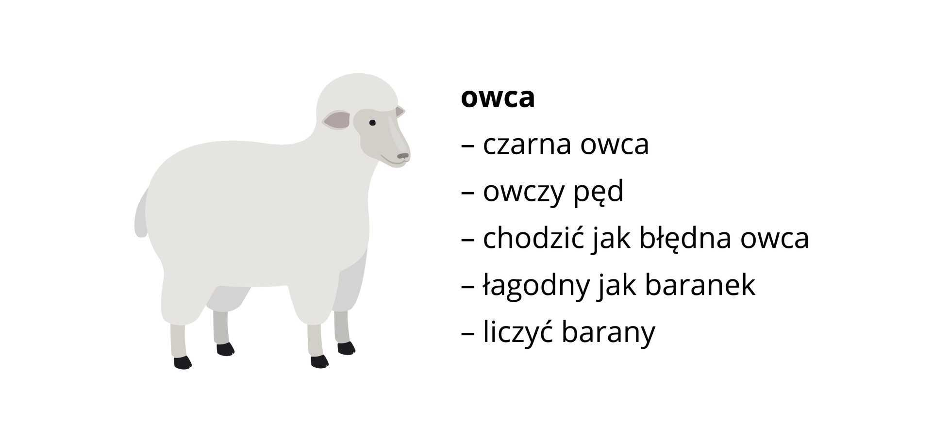 owca ilustracja Źródło: Shutterstock, tylko do użytku edukacyjnego na epodreczniki.pl.