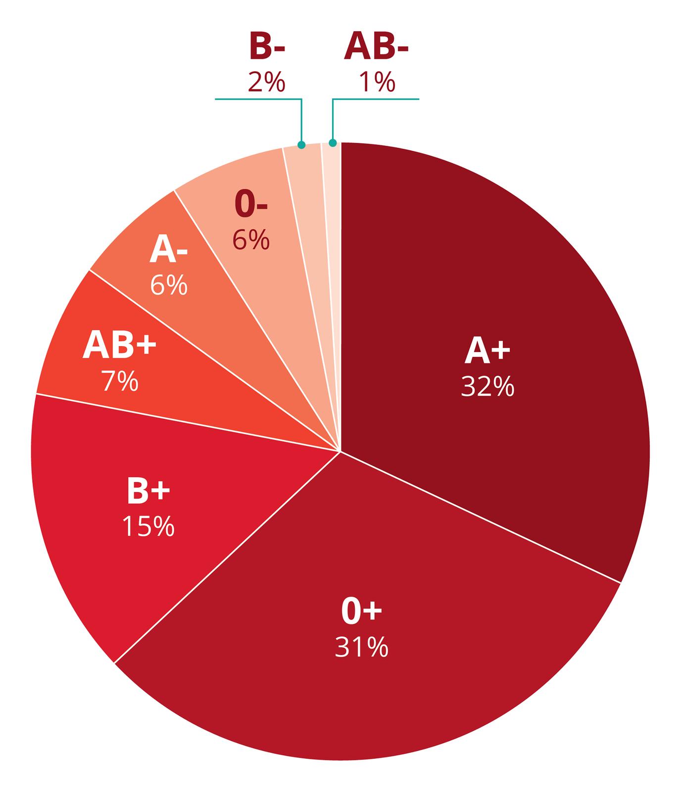 Diagram kołowy przedstawia częstość występowania grup krwi wPolsce. Oprócz grupy krwi uwzględniono czynnik Rh minus lub plus. Różne odcienie czerwieni wskazują, jak często występuje dana grupa krwi. Na górze najmniej częste grupy: B- (2 %) iAB- (1%). Najczęstsze są grupy A+ (32%) i0+ (31%).