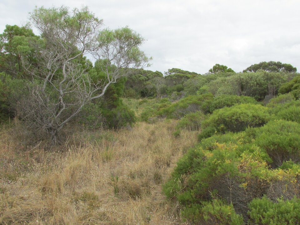 Na zdjęciu suche kępy traw, karłowate zarośla ikrzewy.