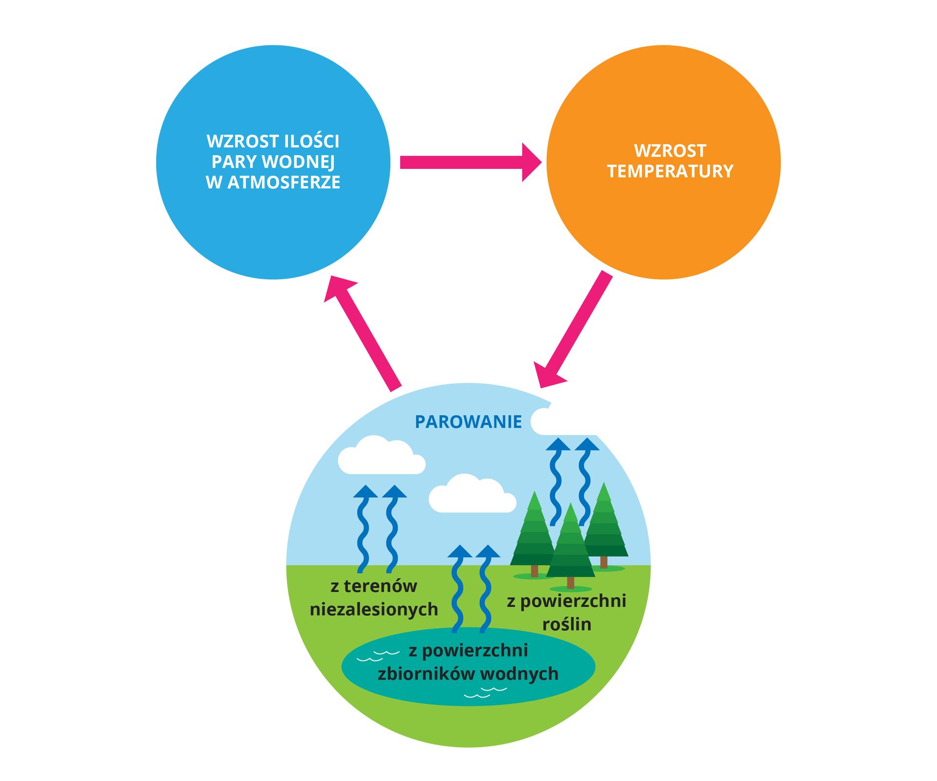 """Ilustracja przedstawia schemat wpostaci trzech kół. Niebieskie oznacza wzrost ilości pary wodnej watmosferze. Strzałka wskazuje skutek: wpomarańczowym kole napis """"wzrost temperatury"""". Strzałka prowadzi do koła udołu, wktórym zielona połowa przedstawia ziemię, aniebieska atmosferę. Temperatura powoduje parowanie zpowierzchni roślin, ze zbiorników wodnych izterenów niezalesionych. Unosząca się para tworzy chmury. Strzałka wskazuje na skutek: wzrost ilości pary wodnej watmosferze icykl się zamyka."""