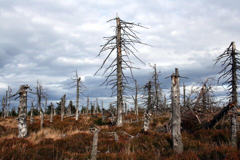 Fotografia prezentująca skutki opadów kwaśnych deszczy. Widoczne nagie, połamane pnie drzew umiejscowione na wzniesieniu.