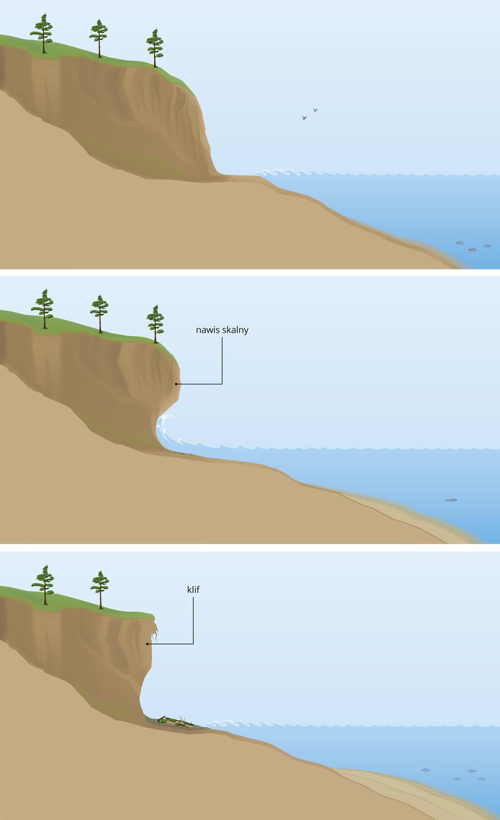 Ilustracje prezentujące kolejne etapy powstawania klifu. Pierwsza ilustracja ukazuje wysoki brzeg morski stykający się zmorzem. Druga ilustracja ukazuje podmywanie przez fale morskie wysokiego brzegu, wwyniku czego powstaje nawis skalny. Trzecia ilustracja ukazuje klif powstały na skutek upadku nawisu skalnego. Upodnóża klifu tworzy się plaża.