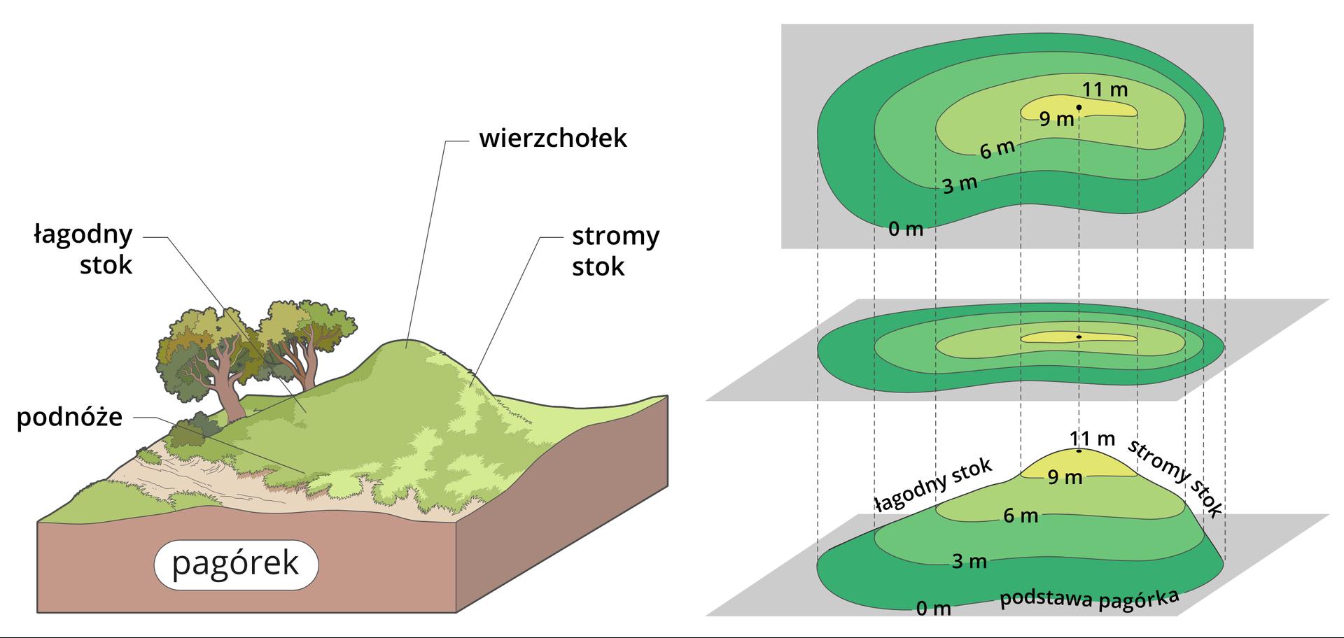 Po lewej stronie znajduje się ilustracja pagórka, na którym zaznaczono następujące opisy: najwyższe miejsce pagórka - to wierzchołek, jego łagodny spadek po lewej stronie - to łagodny stok, stromy spadek po prawej - to stromy stok. Upodstawy pagórka jest podnóże. Po prawej stronie obok ilustracji pagórka są trzy jego odwzorowania.Pierwsze wkolejności od dołu, to model pagórka znarysowanymi na nim liniami – poziomicami. Poziomice są zaznaczone co 3 metry. Mamy kolejno od podnóża poziomice: 0 metrów, 3 metry, 6 metrów, 9 metrów, wierzchołek – 11 metrów. Każda warstwa modelu pagórka, pomiędzy liniami – poziomicami, jest pokolorowana na zielono. Odcień koloru zielonego jest różny wzależności od wysokości. Pomiędzy poziomicą 0 metrów a3 metry, jest kolor ciemnozielony, między 3 metry a6 metrów - zielony, między 6 metrów a9 metrów - jasnozielony, apomiędzy 9 metrów a11 metrów - żółtozielony.Drugie od dołu odwzorowanie, nad modelem pagórka, to przeniesienie – rzut poziomic oraz barw modelu pagórka, na poziomą kartkę. Od każdej poziomicy zmodelu pagórka poprowadzono po dwie przerywane linie na poziomą kartkę, odwzorowując wten sposób szerokość ikształt warstw pagórka. Każda warstwa jest pokolorowana tak samo jak na modelu pagórka. Lewy, łagodny stok pagórka, ma poziomice narysowane dalej od siebie, aprawy, stromy stok, ma poziomice bliżej siebie.Trzecie od dołu odwzorowanie, to rzut modelu pagórka pokazany na pionowej kartce zzaznaczonym kształtem poziomic, wysokością wmetrach ibarwą. Identycznie jak na kartce poziomej, ale dokładnie na wprost oglądającego. Wten sposób możny czytać wysokości na mapach oraz ukształtowanie terenu.