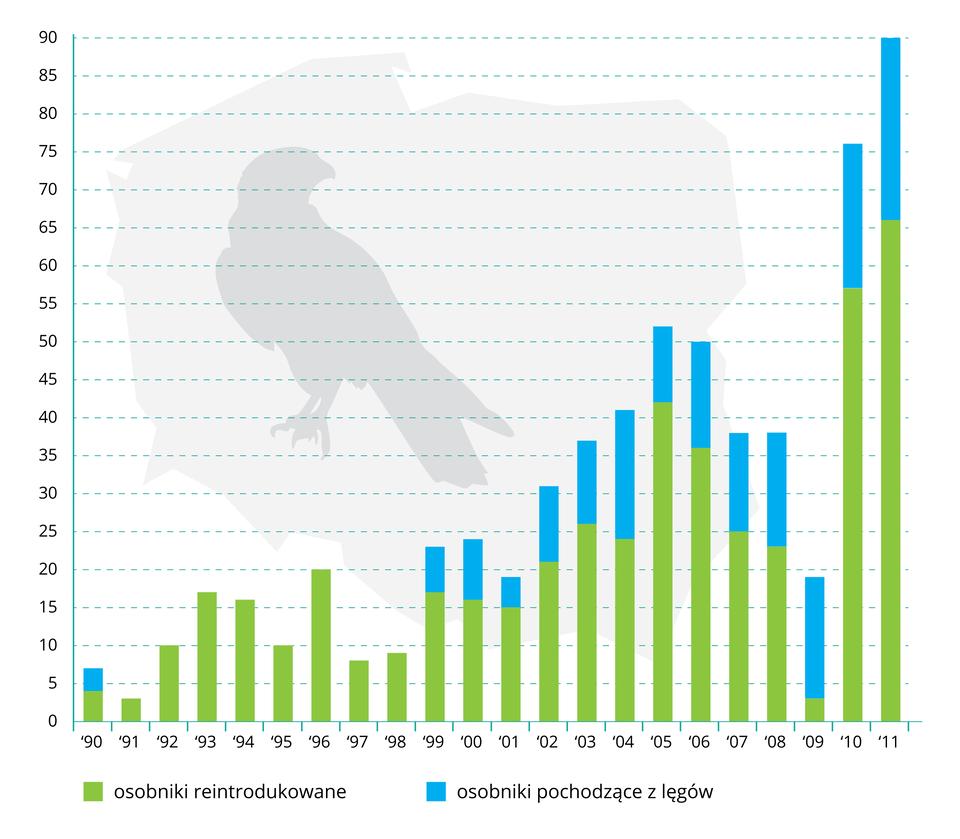 Ilustracja przedstawia diagram słupkowy zmian liczebności sokoła wędrownego wśrodowisku naturalnym. Ilustruje to szara sylwetka siedzącego sokoła. Oś Xwyskalowano co rok od 1990 roku do 2011 roku. Oś Yprzedstawia liczebność ptaków, od zera do dziewięćdziesięciu. Kolorami oznaczono pochodzenie ptaków wsiedlisku. Kolor turkusowy oznacza sokoły znaturalnych lęgów. Barwa zielona oznacza osobniki reintrodukowane.