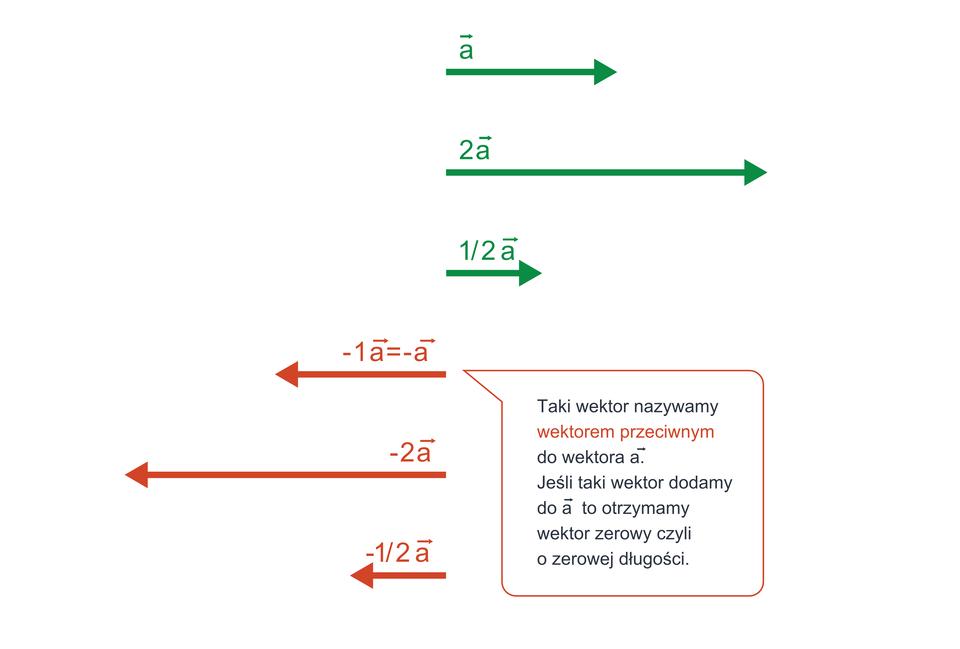 Ilustracja przedstawia metodę mnożenia wektora przez liczbę. Wynikiem mnożenia wektora a⃗ przez liczbę kjest wektor odługości krazy a, gdzie ajest długością pierwotnego wektora. Kierunek pozostaje bez zmian, natomiast zwrot nie zmienia się, gdy liczba kjest dodatnia izmienia się na przeciwny, gdy liczba kjest ujemna. Wektor, który powstaje po pomnożeniu wektora pierwotnego przez liczbę ujemną, nazywamy wektorem przeciwnym.