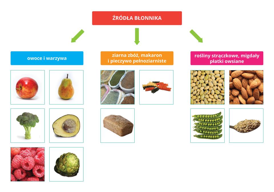 Schemat przedstawia podział źródeł błonnika na: owoce iwarzywa, ziarna zbóż, makaron ipieczywo ziarniste oraz rośliny strączkowe, migdały, płatki owsiane.