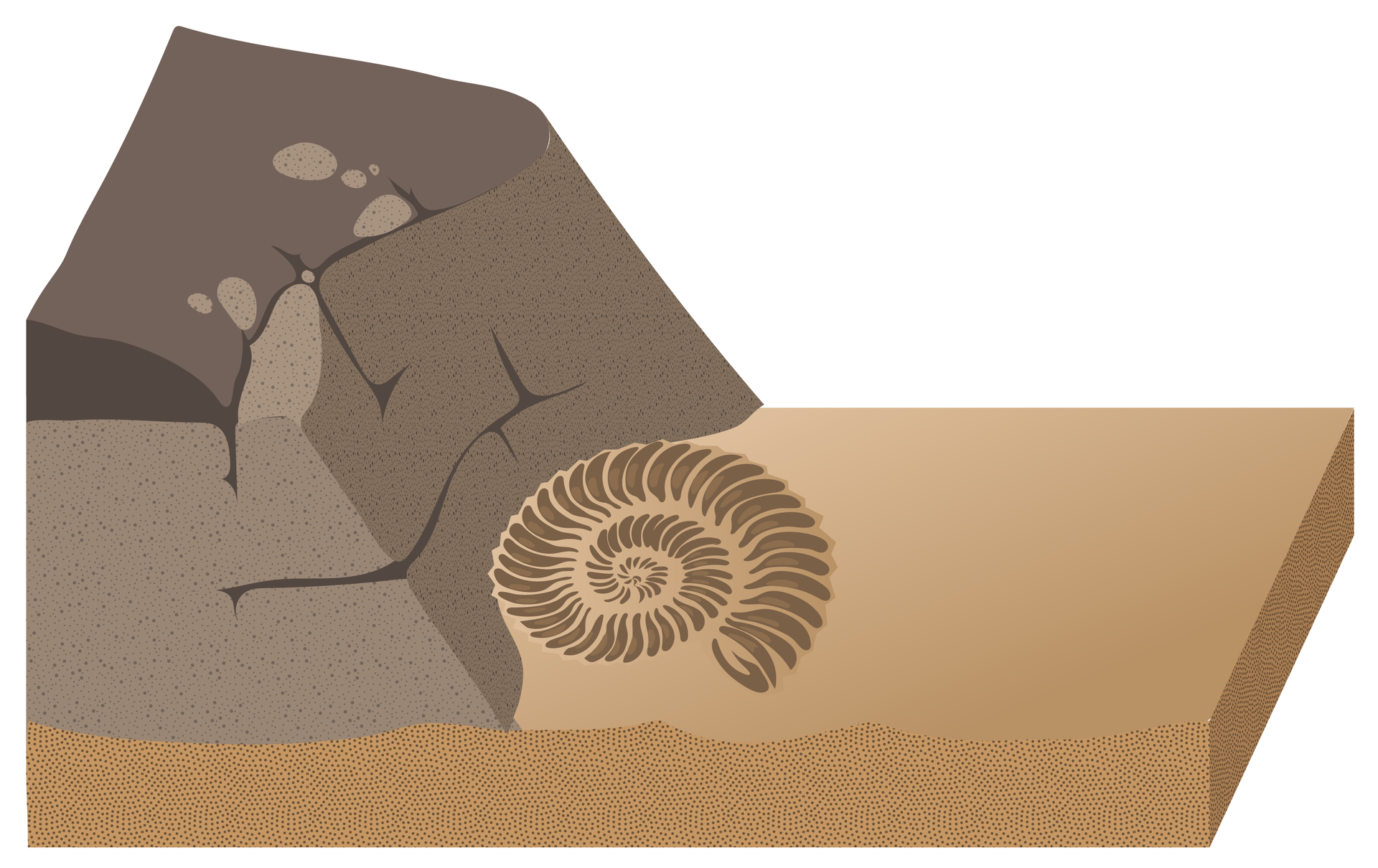 Rysunek przedstawia odsłonięte wwyniku erozji skały, które kiedyś stanowiły dno morza. Wnich widoczna jest skamieniała muszla.