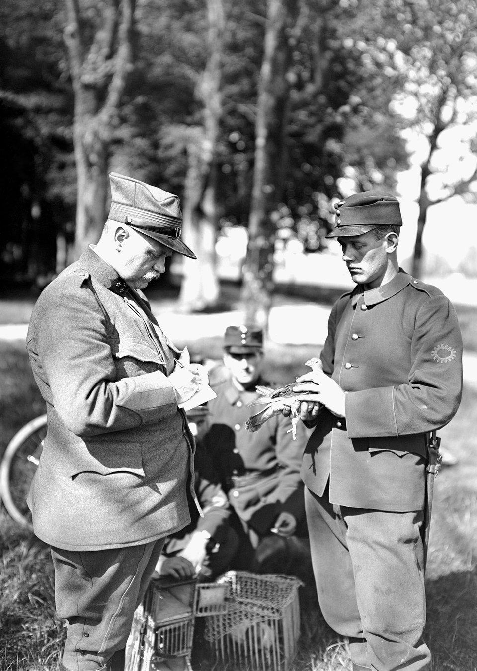 Ilustracja przedstawiająca żołnierzy zczasów Iwojny światowej. Jeden znich trzyma gołębia pocztowego