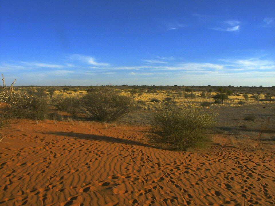 Na południu Afryki wzdłuż zwrotnika Koziorożca notowane są wyższe opady niż na północy wzdłuż zwrotnika Raka idlatego powstała tam półpustynia Kalahari zubogą roślinnością
