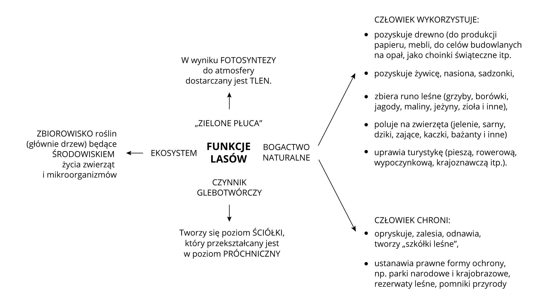 """Na ilustracji schemat przedstawiający funkcje lasów. 1.Ekosystem: zbiorowisko roślin, głównie drzew, będące środowiskiem życia zwierząt imikroorganizmów.2.""""zielone płuca"""": wwyniku fotosyntezy do atmosfery dostarczany jest tlen.3.Czynnik glebotwórczy: tworzy się poziom ściółki, który przekształcany jest wpoziom próchniczny.4.Bogactwo naturalne: Człowiek wykorzystuje – drewno, żywicę, nasiona, sadzonki, zbiera runo leśne, poluje na zwierzęta, uprawia turystykę; człowiek chroni – opryskuje, zalesia, odnawia, tworzy szkółki leśne, ustanawia prawne formy ochrony."""