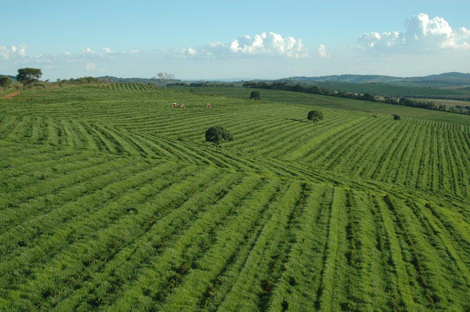Na zdjęciu rozległe ,jednolite, zielone obszary na pofałdowanym terenie oniewielkim nachyleniu.