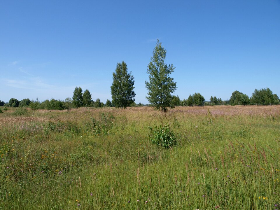 Na zdjęciu rozległa polana, wysokie trawy, pojedyncze krzewy idrzewa liściaste.
