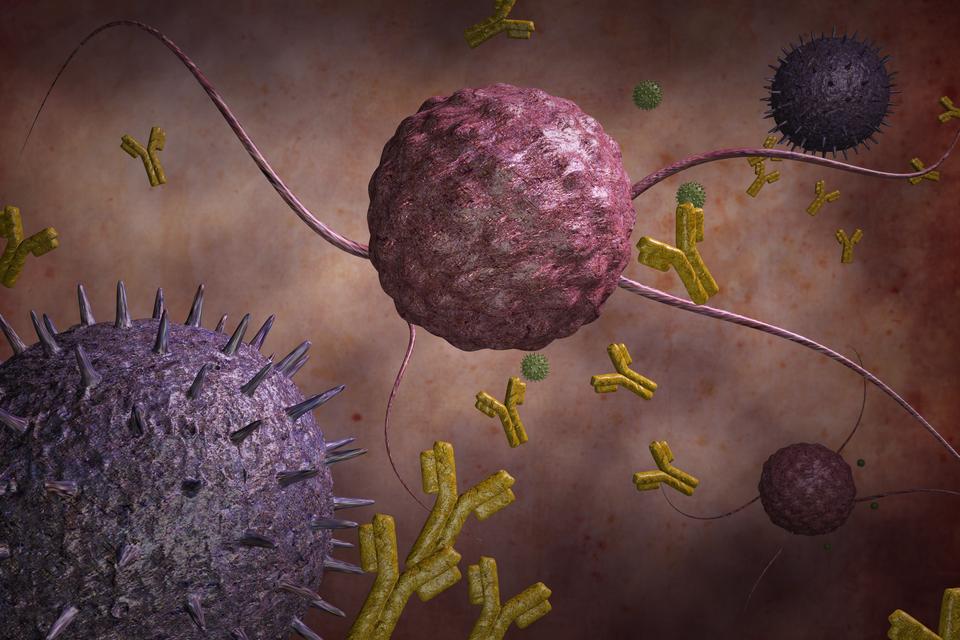 Grafika komputerowa prezentująca krwinki , które produkują przeciwciała wkolorze żółtym ikształcie igreka. Przeciwciała otaczają bakterię widoczną wśrodku.