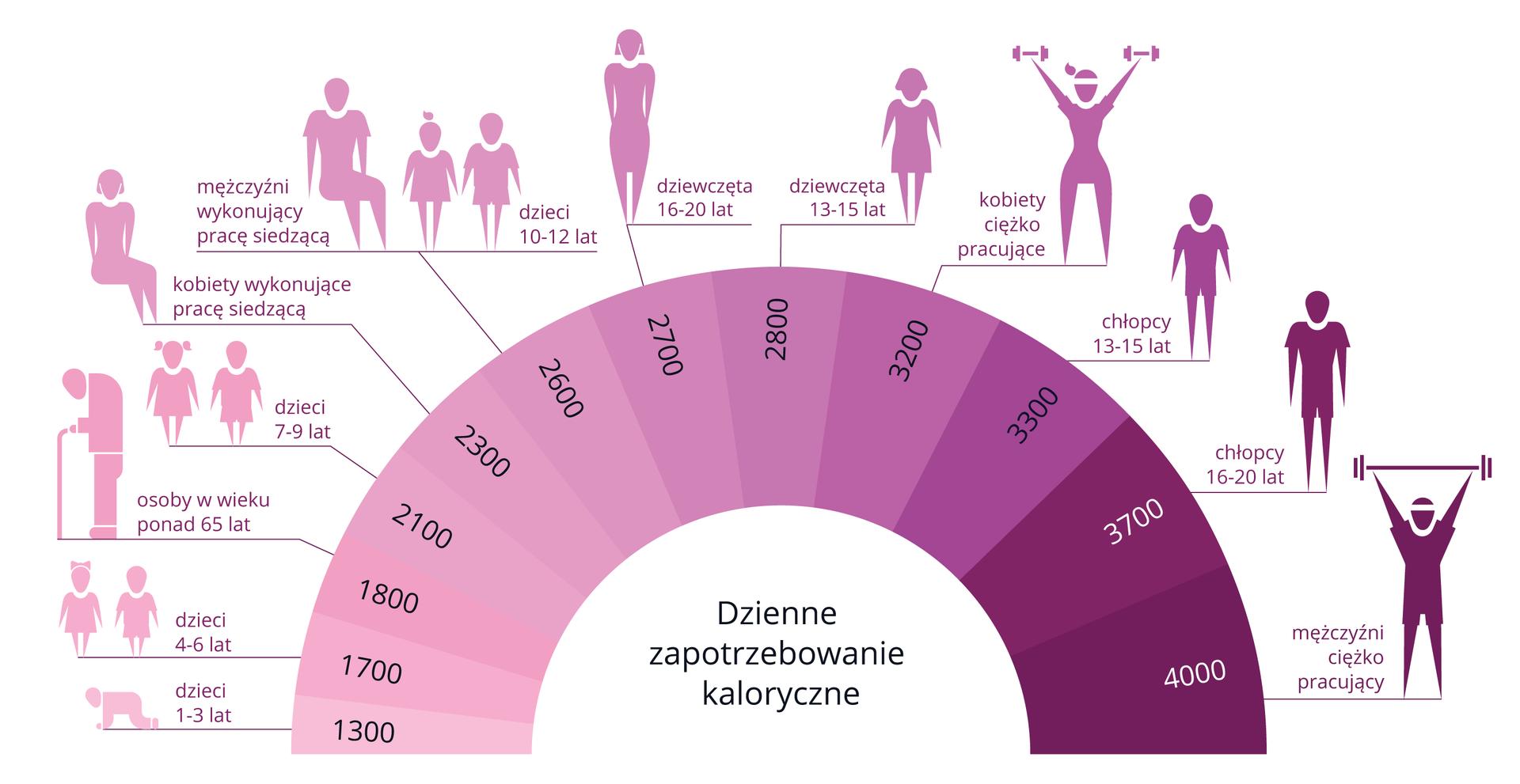 Ilustracja przedstawia dzienne zapotrzebowanie kaloryczne wzależności od płci iwieku. Wfioletowym wachlarzu wpisane liczby kalorii, od 1300 do 4000. Im więcej kalorii, tym odcień ciemniejszy. Nad wachlarzem schematyczne fioletowe sylwetki zopisem wieku, płci irodzaju pracy. Od sylwetek kreski do wachlarza wskazują, ile kalorii dziennie potrzebuje dana osoba.