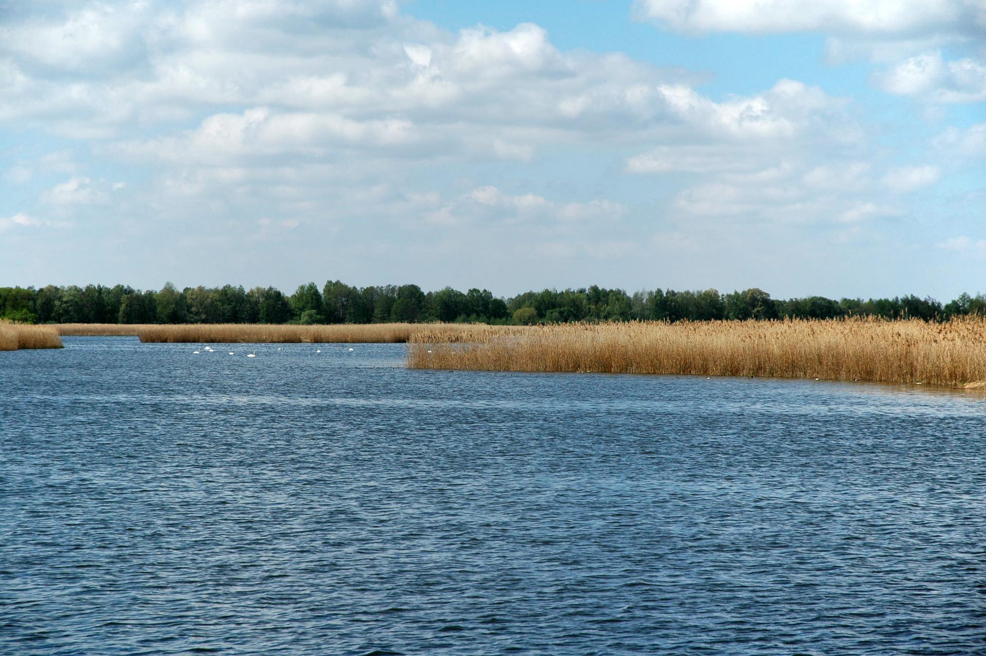 Fotografia prezentuje jeden ze stawów milickich. Widoczny rozległy zbiornik zlicznymi trzcinowiskami.