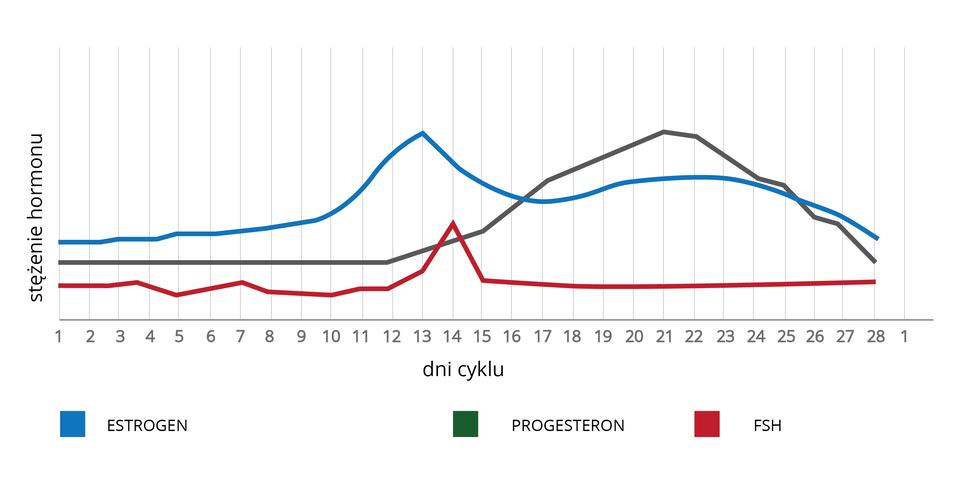 Schemat przedstawiający regulację hormonalną cyklu menstruacyjnego wskazujący na zapłodnienie komórki jajowej