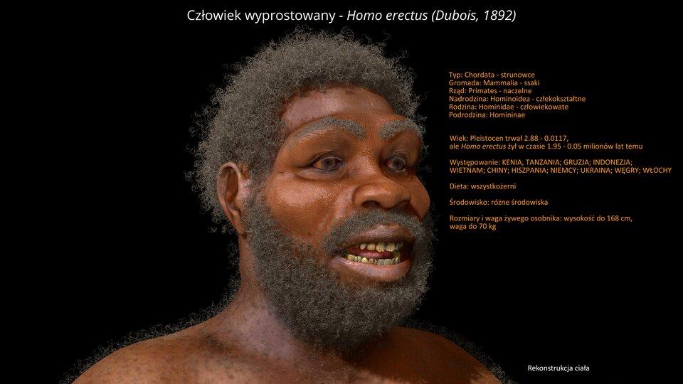 Na ilustracji rekonstrukcja głowy Homo erectusa. Ciemnoskóry mężczyzna zciemnymi kręconymi włosami, wąsami ibrodą. Ma szeroki nos, wydatne brwi, żółte zaniedbane zęby.