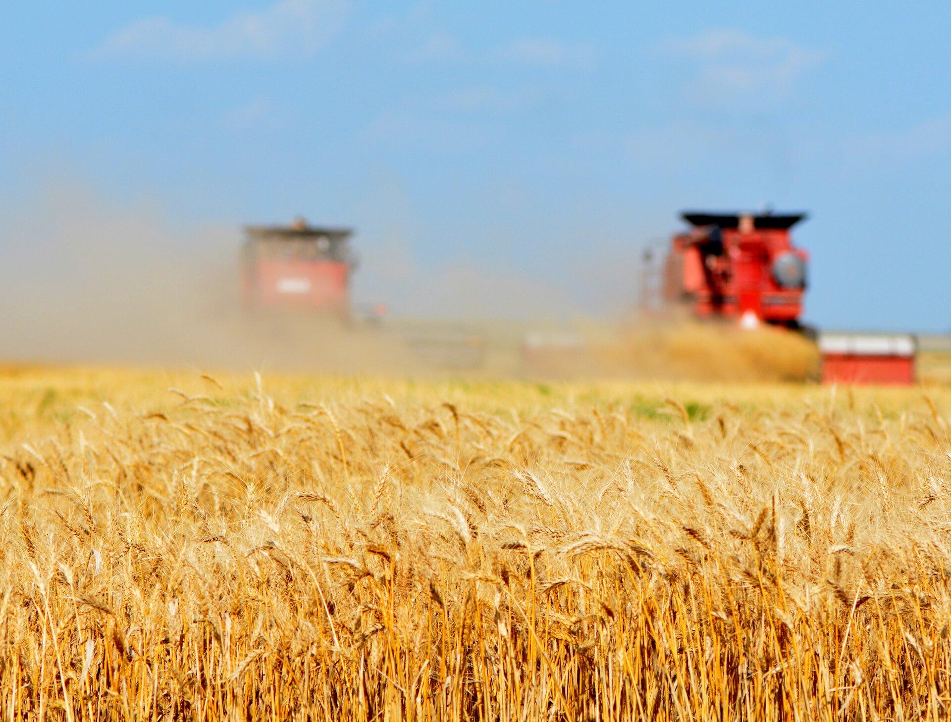 Galeria fotografii prezentuje sposoby zagospodarowania stepów. Pierwsza fotografia przedstawia pole dojrzałej pszenicy, na którym kombajn zbiera plony.