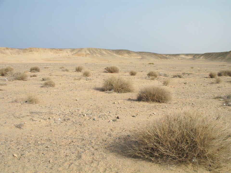 Suche koryto rzeki epizodycznej (ued) na Saharze – rzadko pojawiające się tu opady pozwalają na rozwój bardzo ubogiej roślinności