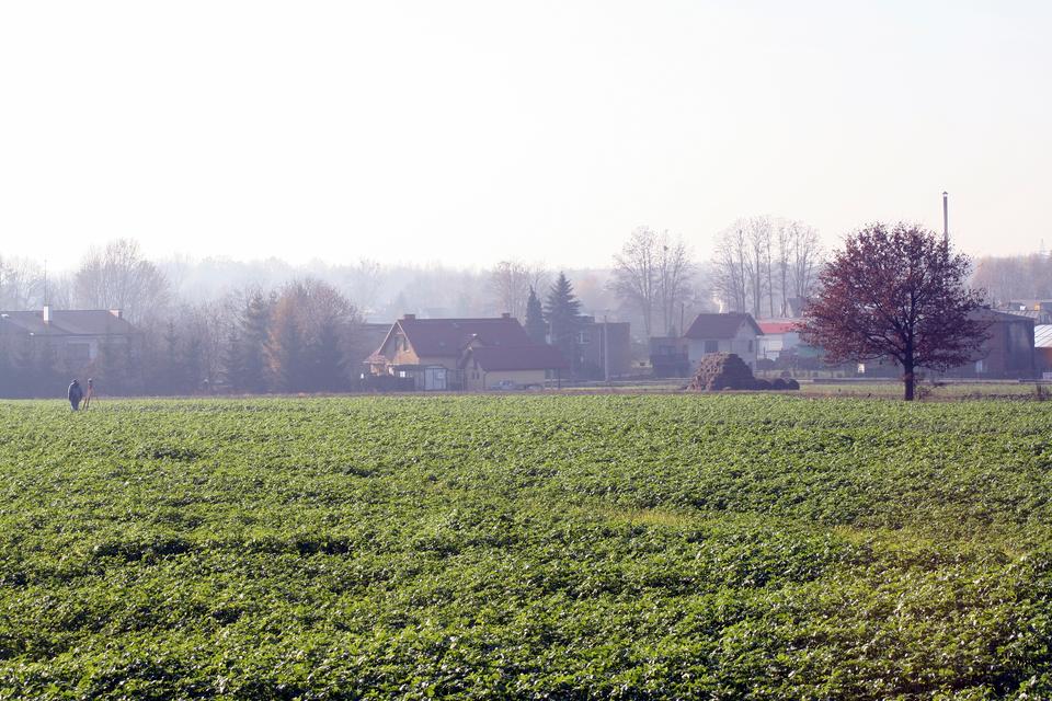 Galeria fotografii przedstawiających tereny rolnicze nizin. Fotografia przedstawiająca pole uprawne ziemniaków.