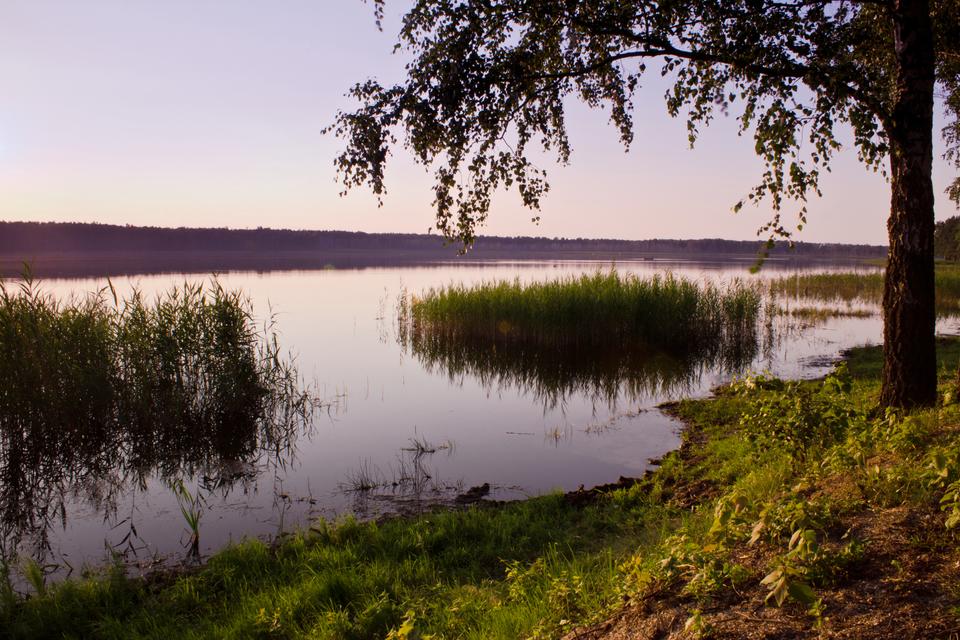 Fotografia przedstawiająca jezioro na obszarze Polesia Lubelskiego. Na pierwszym planie brzeg nad jeziorem, następnie trzciny przybrzeżne oraz tafla jeziora.