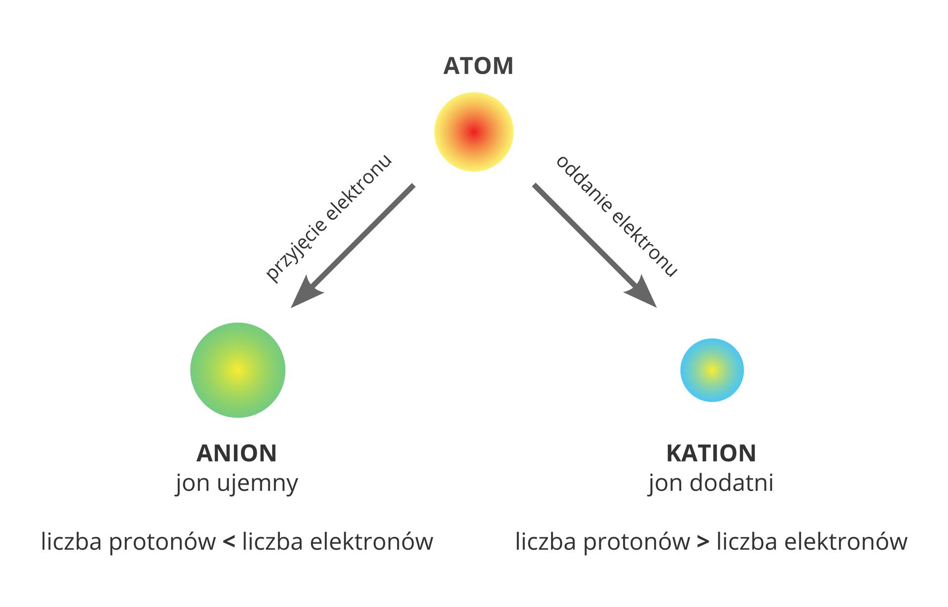 Schemat przedstawia proces przekształcania się atomów wjony ima postać grafu. Centralną górną część zajmuje żółto-czerwone koło podpisane jako Atom. Odchodzą od niego dwie strzałki skierowane wstronę kół żółto-zielonego wlewym dolnym rogu podpisanego Anion oraz żółto-niebieskiego wprawym dolnym rogu podpisanego Kation. Dodatkowe informacje zawarte wschemacie głoszą, że anion to jon ujemny wktórym liczba protonów jest mniejsza od liczby elektronów, apowstaje wwyniku przyjęcia elektronu przez atom, zaś kation to jon dodatni oliczbie protonów większej od liczby elektronów ipowstaje wwyniku oddania elektronu przez atom.