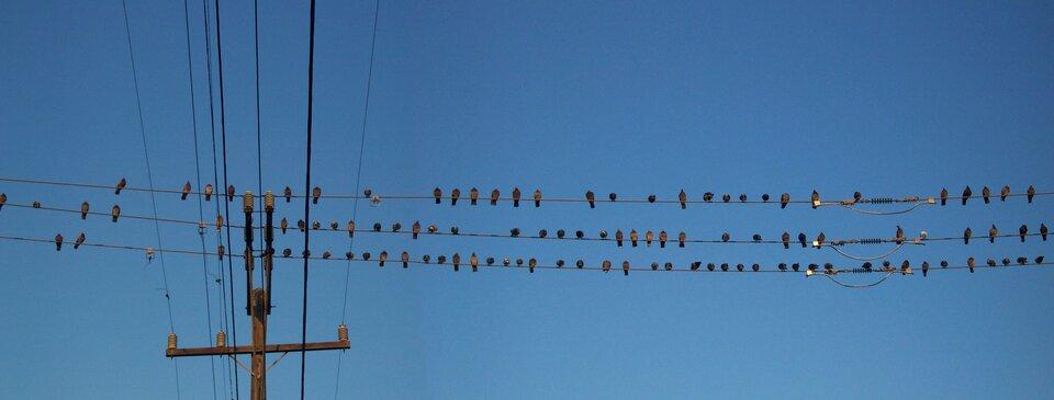 Ptasi sejmik